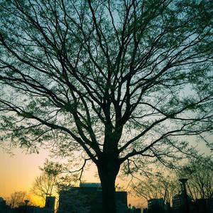 【サンプル】風景を綺麗に撮るための写真講座