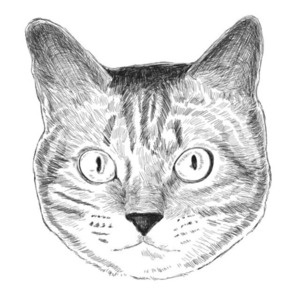 ペットの似顔絵を制作します
