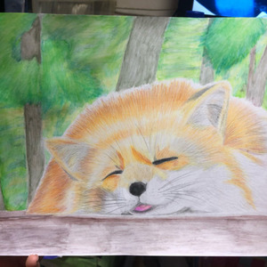 キツネ🦊色鉛筆画