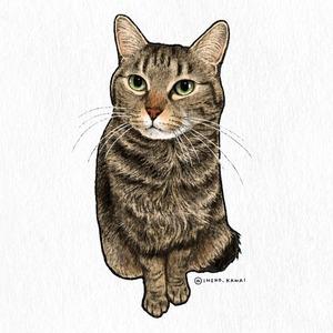 愛猫のイラスト描きます🐱【半身〜全身/カラー】