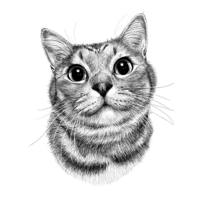 鉛筆画風の愛猫のイラスト描きます【顔のみ〜胸あたりまで】