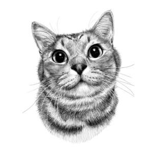 愛猫の肖像画描きます🐱【顔のみ/モノクロ】