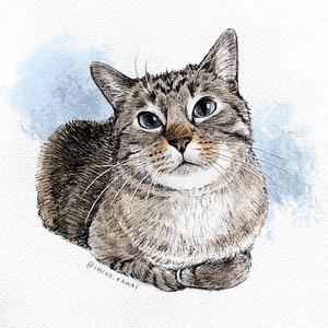 水彩スケッチ風の愛猫のイラスト描きます【半身〜全身】