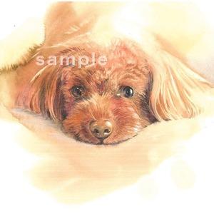 ペット・動物を水彩と色鉛筆で描きます