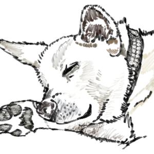 ペットの似顔絵を描きます!
