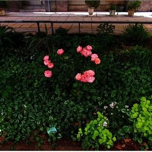 風景 2DCG 花壇の植物 アニメ調 背景 制作承ります。