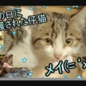 お客様のYouTubeのチャンネルを宣伝いたします☆.:*・